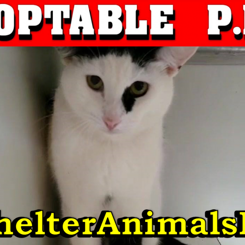 Weekly Adoptable PETS Video