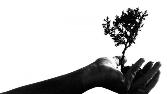 Hand tree branch public domain image from Bing